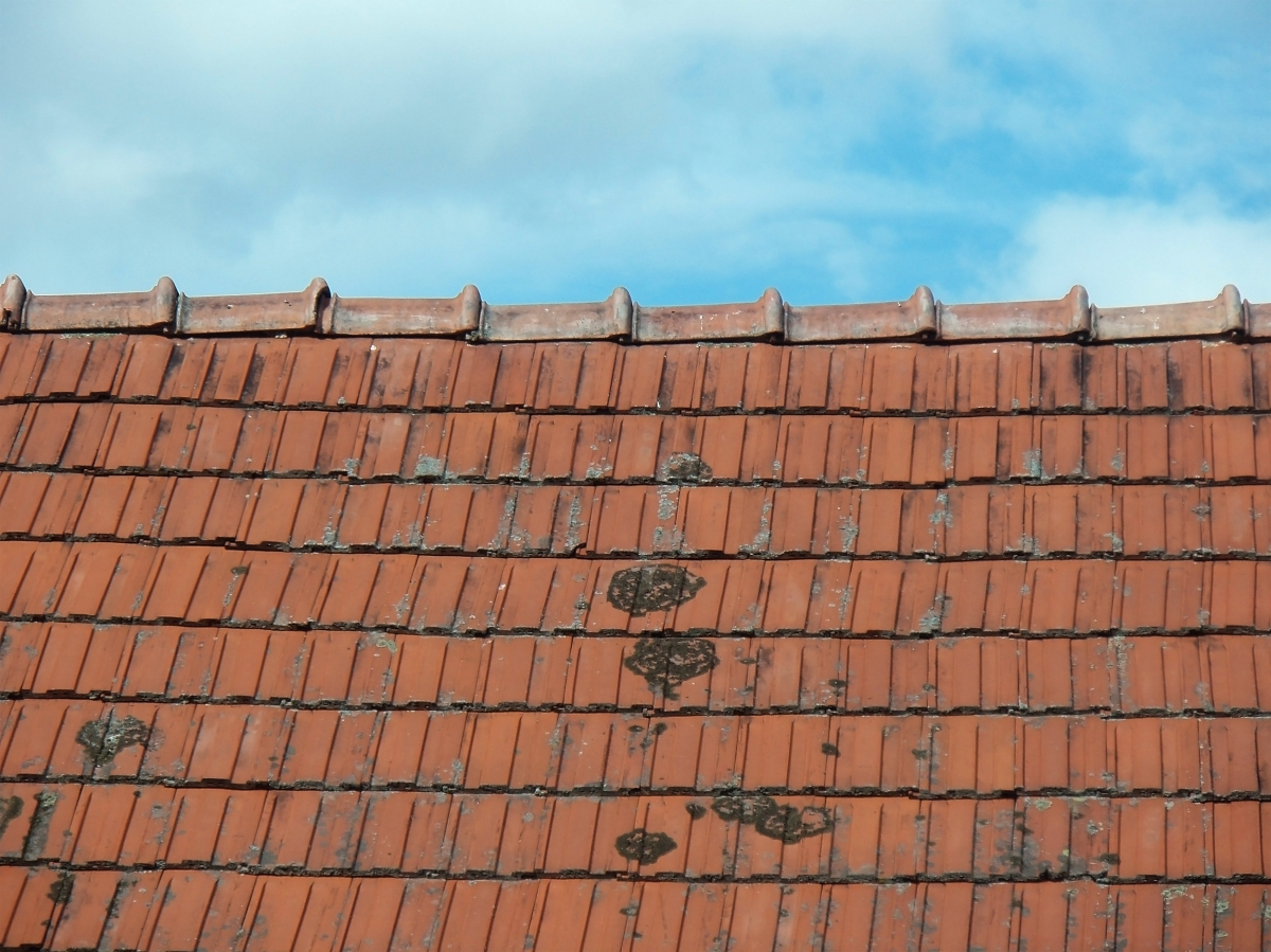 Roof Cleaning Removing Mold And Mildew Smarter Cleaning